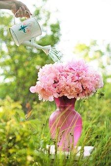 Watering, Watering Can, Sprinkle, Peonies, Flowers