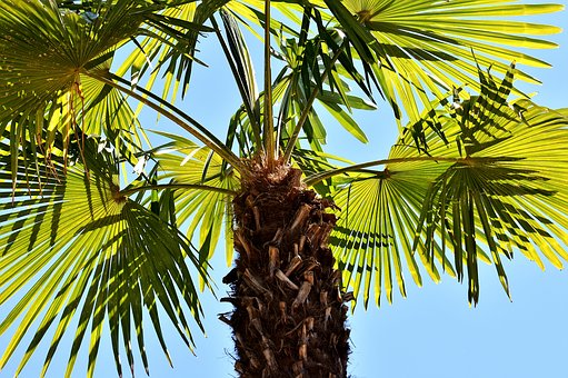Palm, Summer, Holidays, Summer Feeling, Holiday, Sky