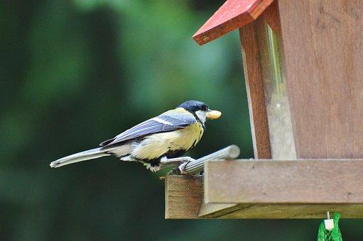 Tit, Bird, Foraging, Animal, Garden, Feeding Station
