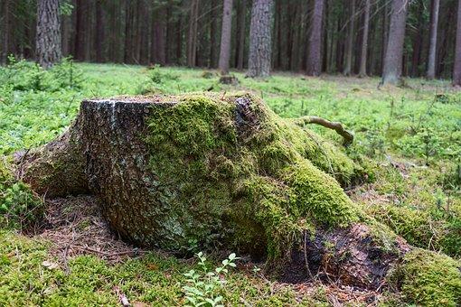 Stump, Forest, Moss, Wood, Nature, Vegetation