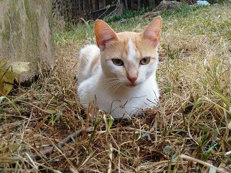 Cats, Pet, Kitten, Feline Look, Animals, Feline, Eyes