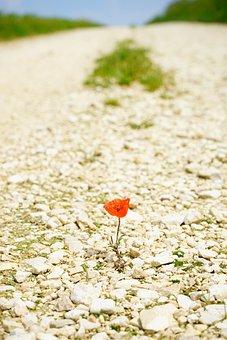 Away, Target, Endless, Wide, Poppy, Flower, Blossom