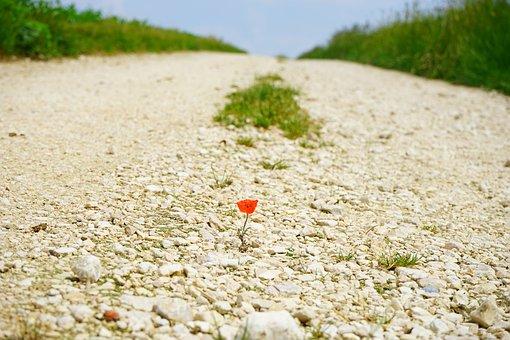 Away, Road, Poppy, Flower, Blossom, Bloom, Individually