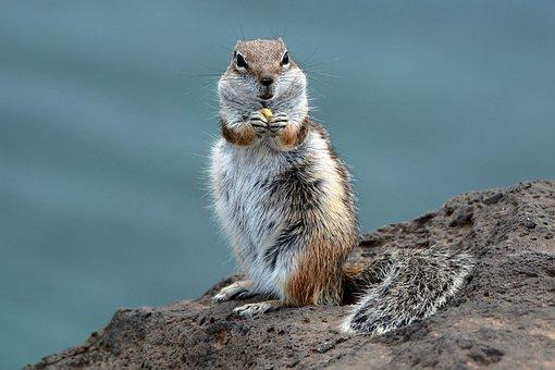 Chipmunk, Rodent, Furry, Hungry, Careful, Mammal, Cute