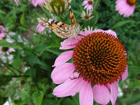 Flowers, Butterfly, Nature, Summer, Plant, Green, Color