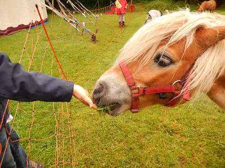 Horse, Feed, Grass, Coupling, Circus, Meadow, Pony