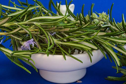 Rosemary, Culinary Herbs, Herbs, Rosmarinus Officinalis