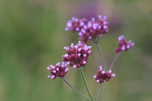 Flower, Plant, Nature, Garden, Green, Gardening, Flora