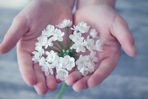 Flower, Flowers, Small Flowers, White, White Flower