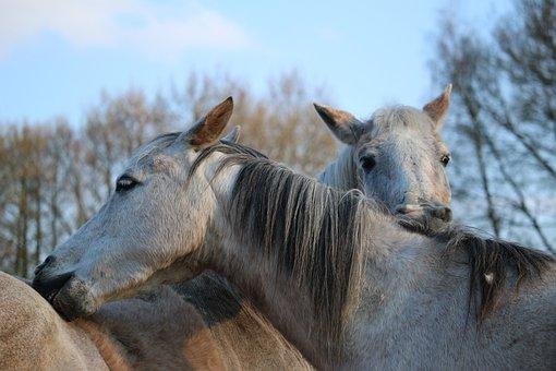 Horse, Mold, Crawl, Mane, Thoroughbred Arabian