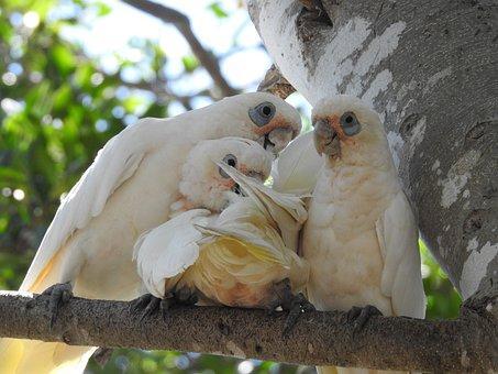 Parrots, Family Mum, Wildlife, Wild, Bird, Nature