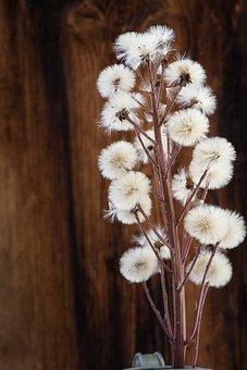 Butterbur, Petasites, Composites, Forest Flower