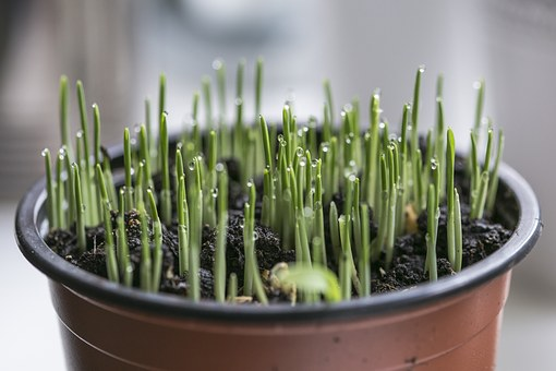 Green, Grass, Sprout, Macro, Detail, Nature, Plant
