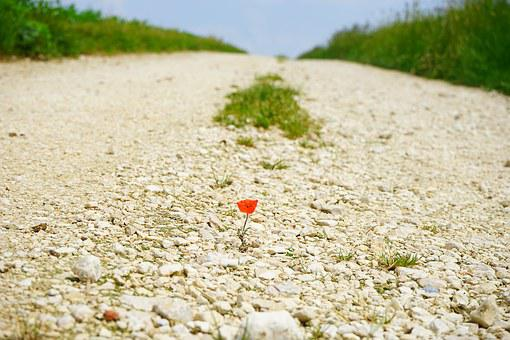 Away, Road, Poppy, Flower, Blossom, Bloom, Individually