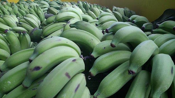 Banana, Green, Cacho, Fruit, Nature, Banana Tree