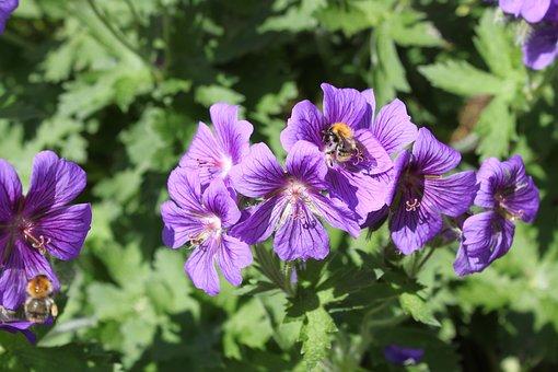 Purple, Green, Nature, Flowers, Garden, Green Leaves