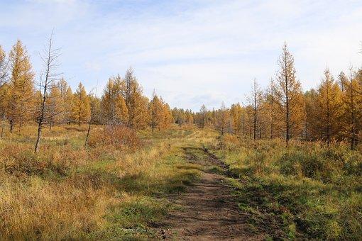 Nature, Trees, Autumn, Steppe, Landscape, Forest