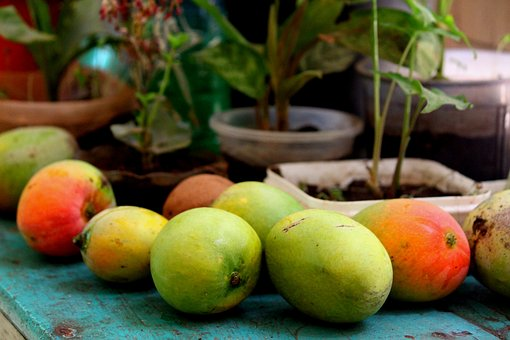 Bharath, India, Mango, Random, Yummy, Mangofarming
