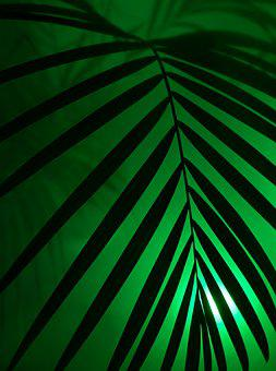 Palm, Neon Light, Neon, Party, Art, Artificial, Leaf