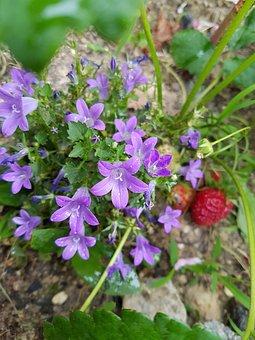 Violet Wild Flower, Wildflower, Perimeter Road