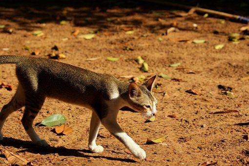 Bharat, India, Monsoon, Travel, Cat, Random, Nature