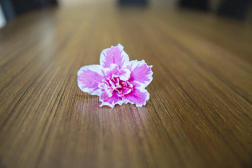 Floweers And Table, Backround, Desk