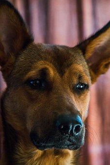 Dog, Pet, Nose, Animal, Cute, Canine, Mammal, Puppy