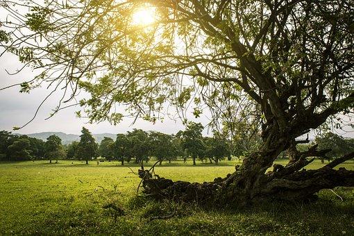 Nature, Sunny, Sunset, Sky, Clouds, Landscape, Field