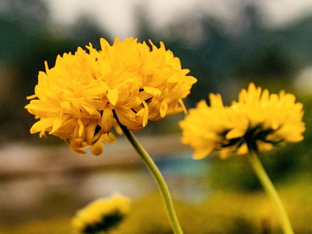 Flower, Yellow, Yellow Flowers, Nature, Spring, Green