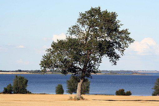 Tree, Mystical, Haunting, Lolland, Kragenäs