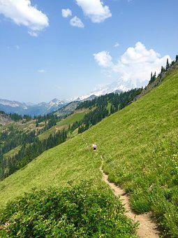 Meadow, Trail, Mountain, Landscape, Tatoosh, Rainier