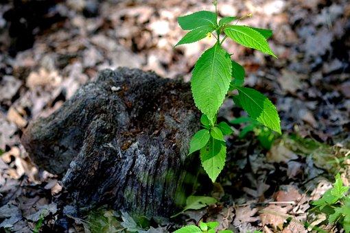 Plant, Green, Nature, Close, Dead Tree Stump, Live