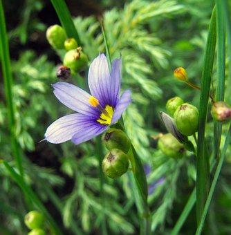 Flower, Detail, Plant, Garden, Piestik