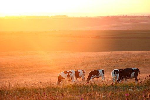 Sunset, Beechcraft Corner, Prairie