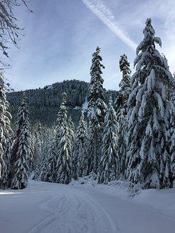 Snow, Winter, Trees, Forest, Season, Blue, White, Cold