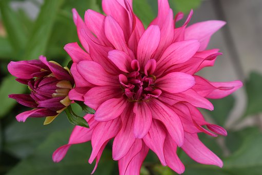 Flower, Garden, Summer, Plant, Colors, Flowers, Pink