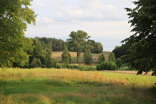 Meadow, Tree, Nature, Polyana, Poland, Green, Field
