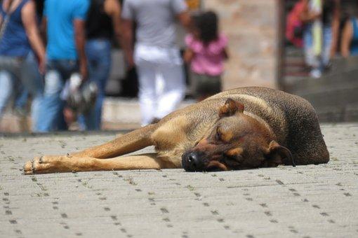 Dog, Street, Canine, Pet, Animal, Abandoned, Stray Dog