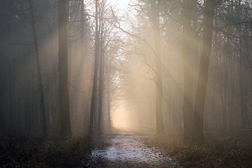 Sunbeam, Forest, Fog, Trees, Nature, Morgenstimmung