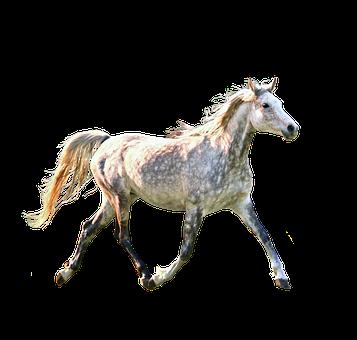 Horse, Trotting, Dapple, Gray, Grey, Equine, Running