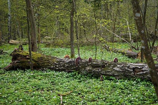 Trunk, Dead Tree, Tree, Spróchniały Stock, Mushrooms