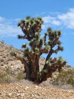 Usa, Cactus, Very Big