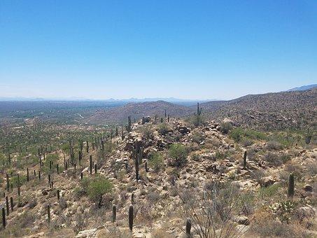 Desert, Saguaro, Cactus, Arizona, Nature, Landscape