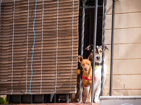 Dog, Dogs, Pet, Animal Portrait, Enjoy The Sun