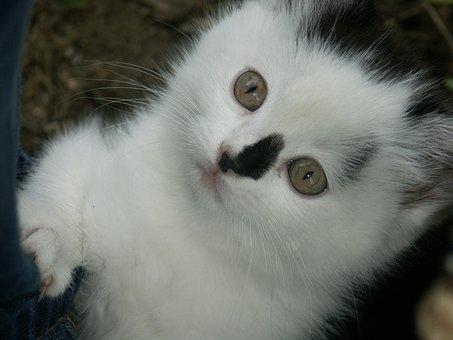 Cat, Animal, Cute, Pet, Kitten, Domestic, Feline
