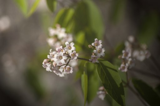 Plant, Flower, Romantic, Pink, Green, Soft, Nature