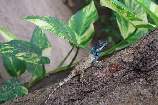 Leaf, Green, Jungle, Lizard, Wild, Tropical, Colorful