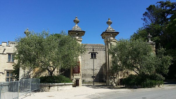 Olive Trees, Trees, Entry, Portal, Avignon, Property