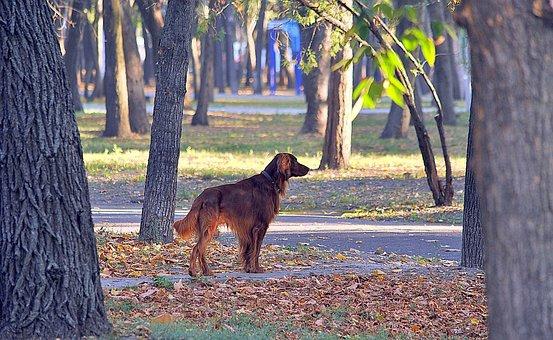 Park, Dog, Man's Best Friend, Animal, Foliage