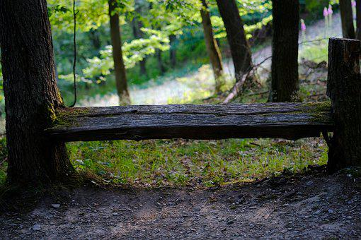 Bank, Forest, Nature, Resting Place, Bench, Rest